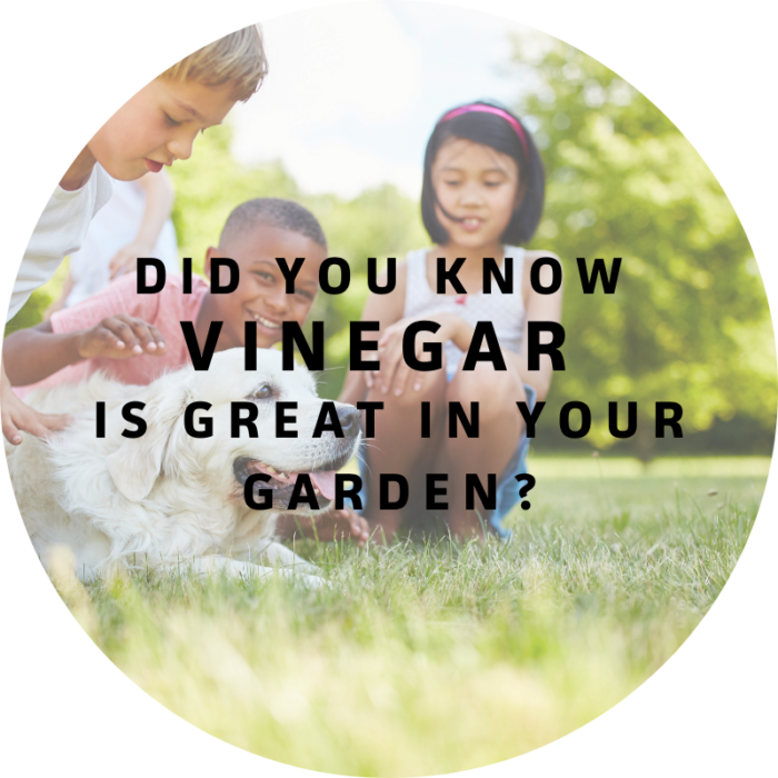 Did you know vinegar is great in your garden? Check out WeedX from Goulter's